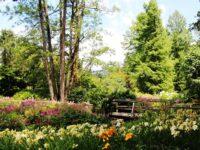 Arboretum-Volcji-Potok-trajnice-v-parku-arboretum-julij-foto-Mateja-Racevski